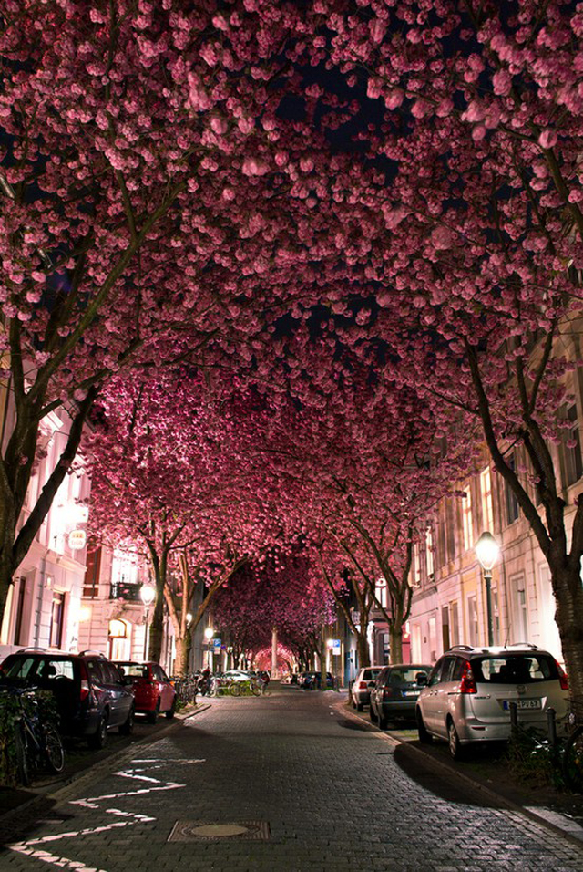 Street filled with billions of fuscia flowers in trees  Mademoiselle Armoire, why is it so special? imagem4