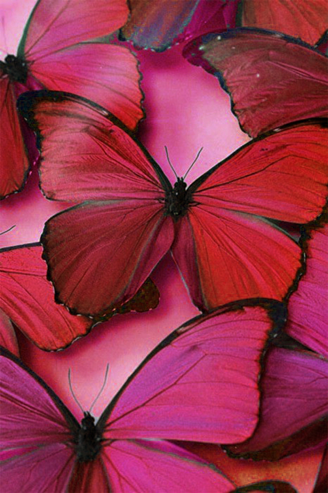 Fuscia Butterflies  Mademoiselle Armoire, why is it so special? imagem5