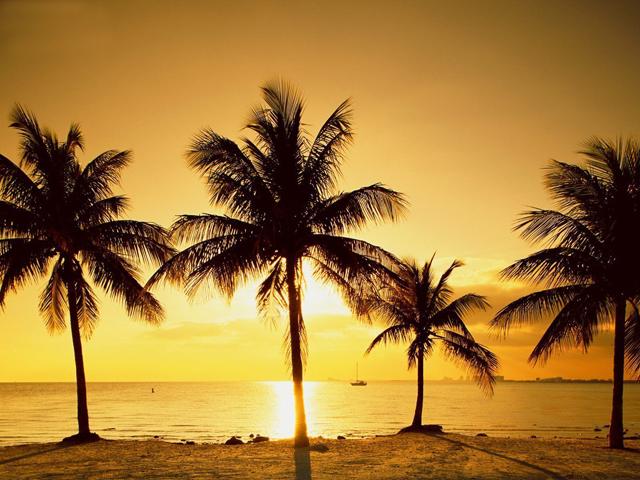 miami beach  City Guide Miami miami beach
