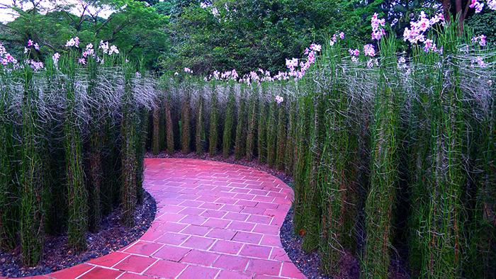 exotic-Singapore-Botanic-garden-2