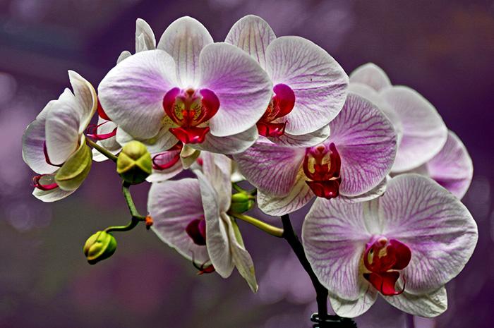 orchid flowers singapore garden