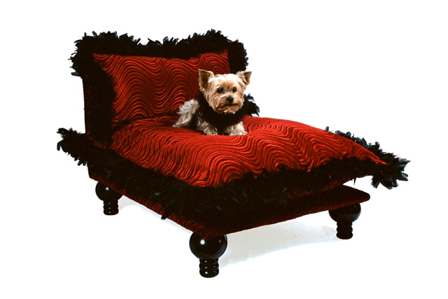 Top 5 Luxuries Nyc Dogs Cannot Live Without Love Happens