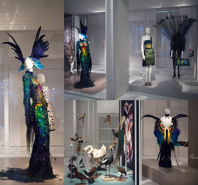 Birds of Paradise - Most inspiring feathers in design world