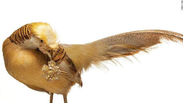 Luxury Guilty Pleasures we Covet* Ana Chan's Bird inspired Jewelry