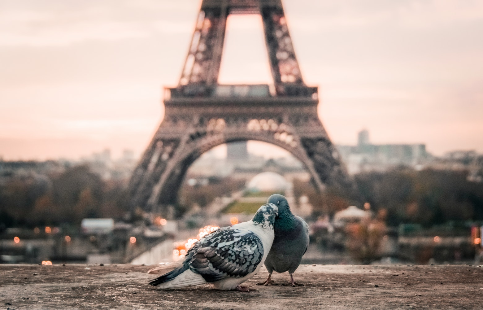 paris - romantic paris - places to go for new year's eve - new year's eve - nye - fabrizio verrecchia - paris - paris love - eiffel tower - in love at the eiffel tower - tour d'eiffel - pigeons - kissing