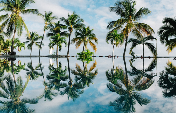 palm tree reflections in a pool of water on the island of mauritius - 2019 luxury travel destinations
