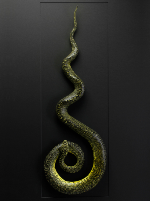 Mounted Diamond Carpet Python by Christopher Marley - dark decor