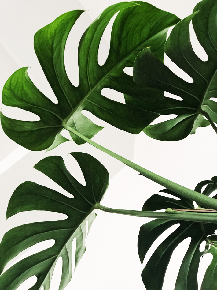 large green interior plant - sustainable home improvement ideas