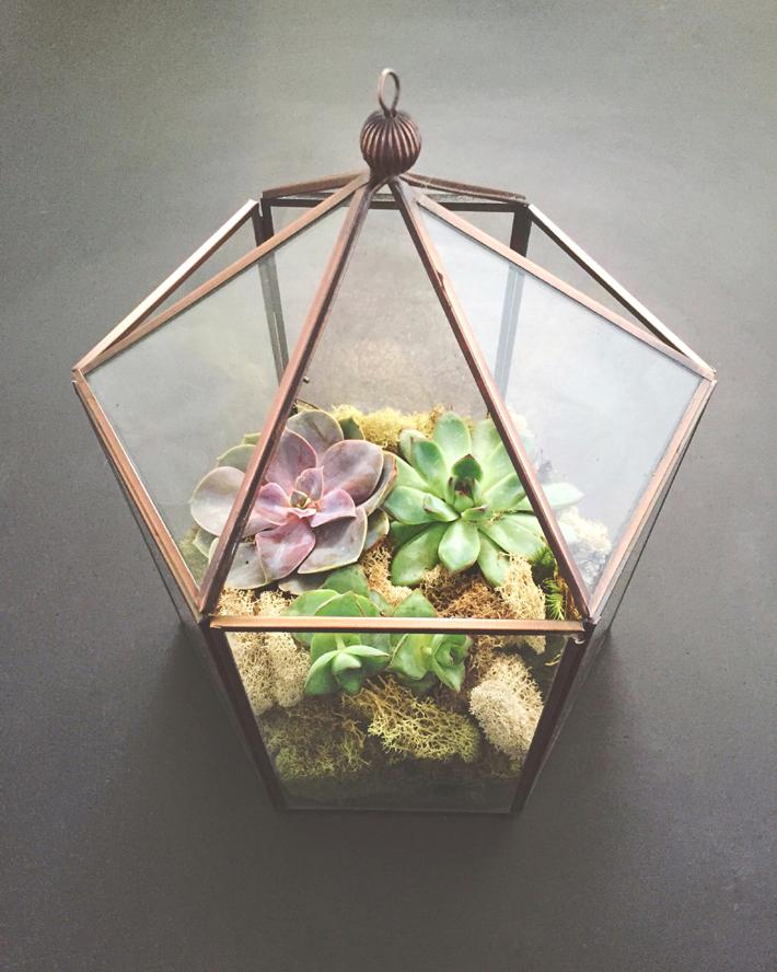 dyi planters - succulents in glass terrarium Photo by Fallon Michael / Unsplash