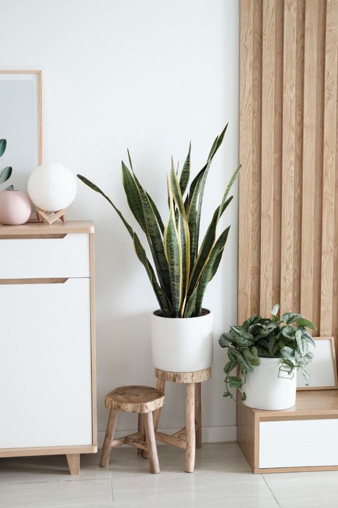 scandi-style design with plants - Photo by Minh Pham / Unsplash