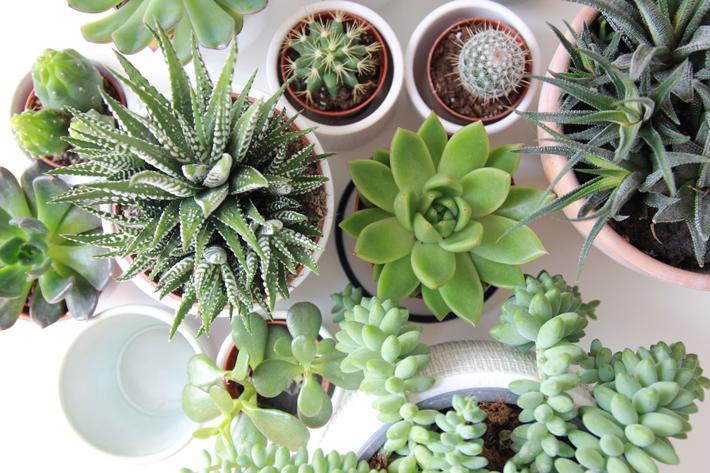 potted succulents - Photo by Skyla Design / Unsplash