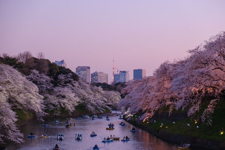 Chidorigafuchi park during the spring season, Photo by Yu Kato
