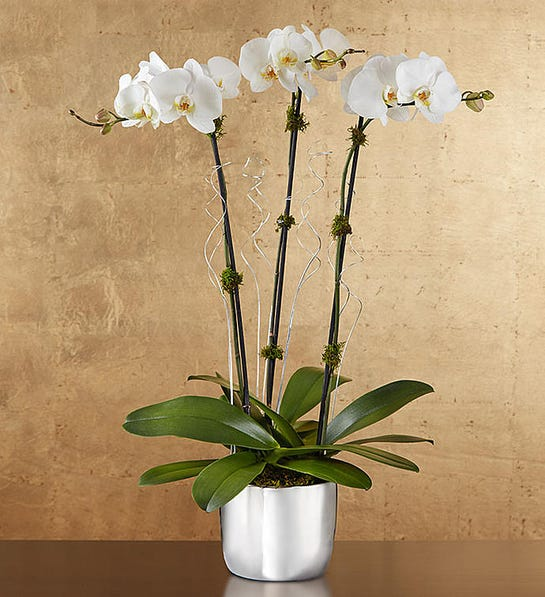 top online flower delivery services silver celebration orchids 1-800-flowers