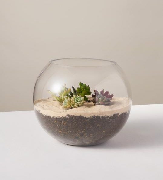 the sill succulent terrarium kit