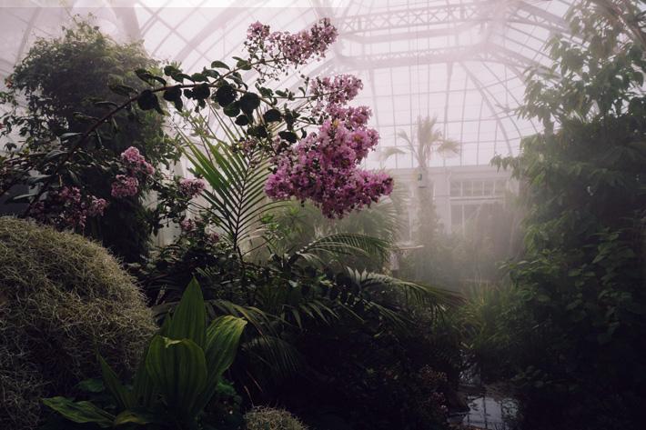 luxury greenhouse conservatory echo wang unsplash