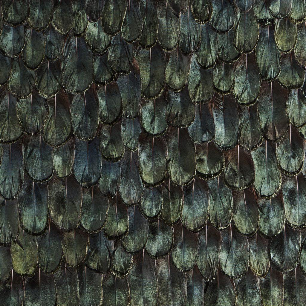 Iridiscent Peacock Feathers koket wallpaper textile finish