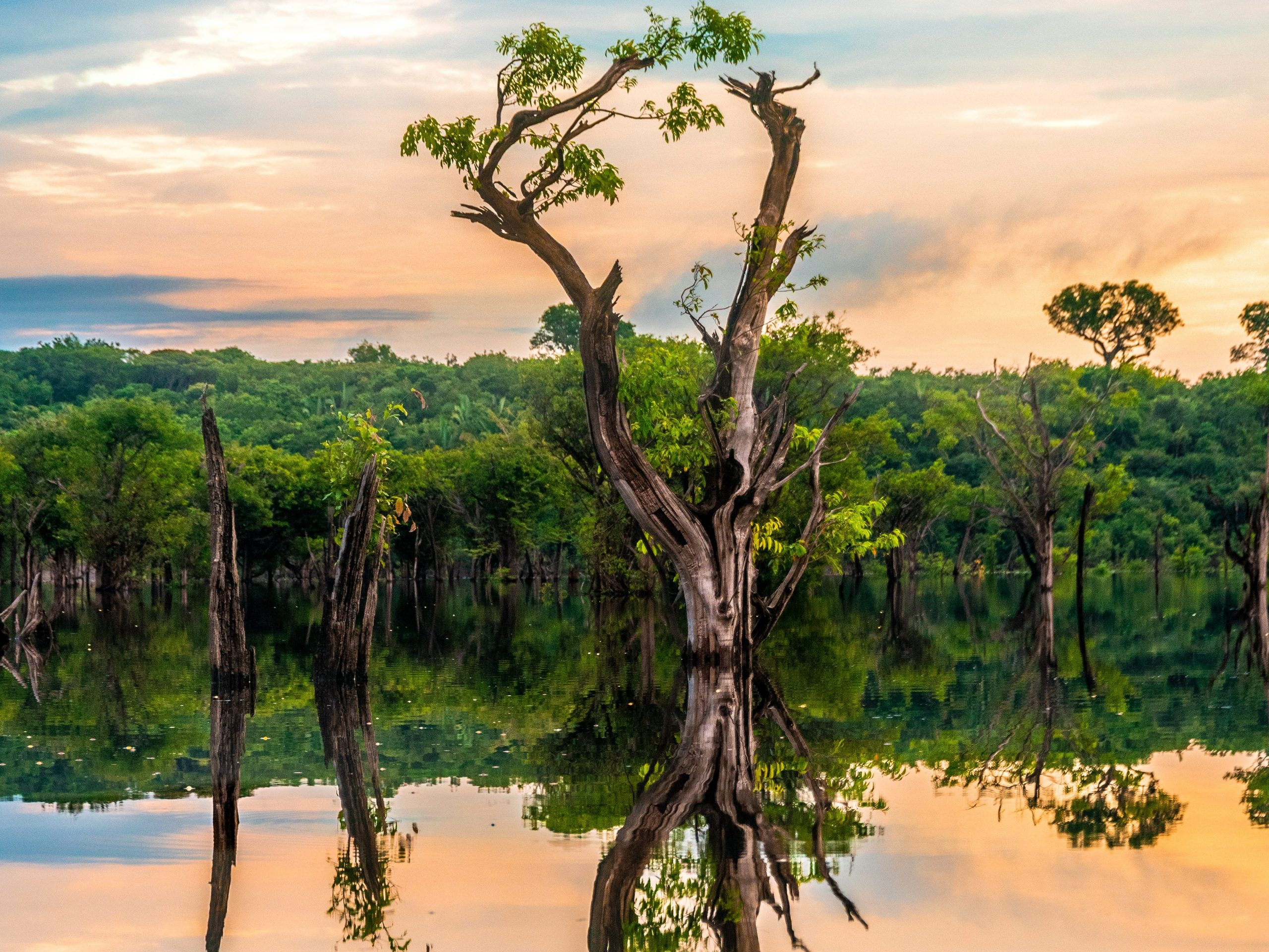 The flooded trees of Amazonas, Brazil (Photo by Sébastien Goldberg)