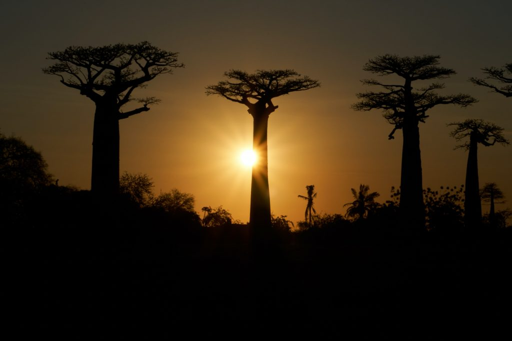 best private vacation spots Sunset at the Avenue of the Baobas, Madagascar (Photo by Dmitrii Zhodzishskii)